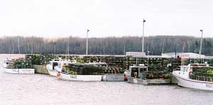 Wharf loaded with traps